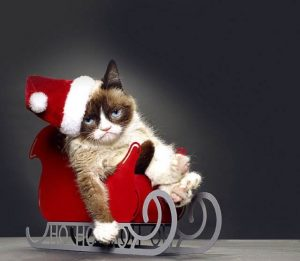 christmasgrumpy-cat