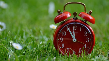 Red clock in grass