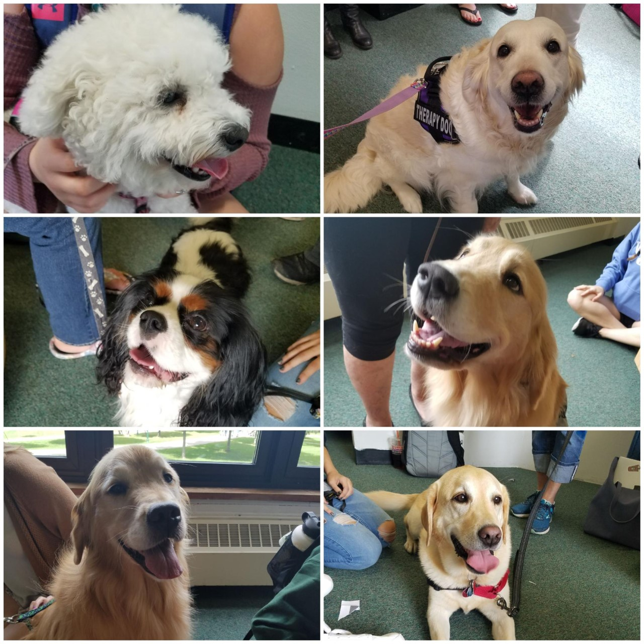 Therapy Dogs in the Library, every Thursday from 12:45-1:45!